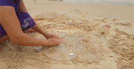 Hướng dẫn sơ chế sứa làm nộm - Cách làm nộm sứa dưa chuột