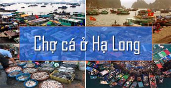 Chợ hải sản Hạ Long - Thiên đường cho những người yêu hải sản