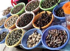 Top 10 địa chỉ ăn ốc ngon ở Hạ Long